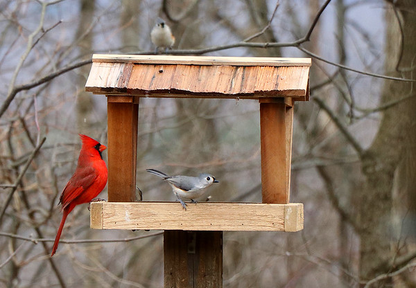 Friends on the bird feeder in Brown County State Park.<br /> <br /> Photographer's Name: Jerry Byard<br /> Photographer's City and State: Anderson, Ind.
