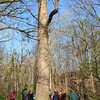 A group of hikers at Mounds Park is admiring one of the many old growth oak trees along White River.<br /> <br /> Photographer's Name: Jerry Byard<br /> Photographer's City and State: Anderson, Ind.