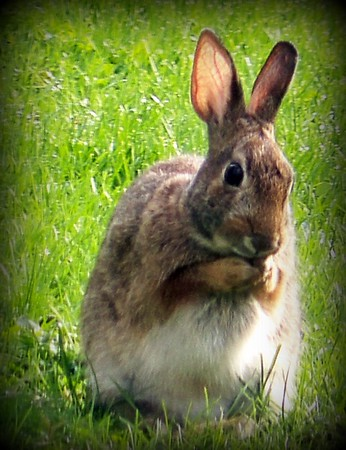 A back yard visitor.<br /> <br /> Photographer's Name: Debra Howell<br /> Photographer's City and State: Pendleton, Ind.