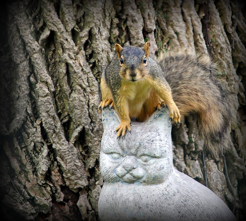 A squirrel sitting on a cat statue, photo by Allan L. Howell.<br /> <br /> Photographer's Name: Debra Howell<br /> Photographer's City and State: Pendleton, Ind.