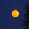 """May full moon, a.k.a. the """"flower moon.""""<br /> <br /> Photographer's Name: J.R. Rosencrans<br /> Photographer's City and State: Alexandria, Ind."""