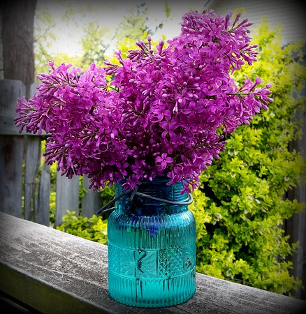 A bouquet of lilacs from the garden.<br /> <br /> Photographer's Name: Debra Howell<br /> Photographer's City and State: Pendleton, Ind.