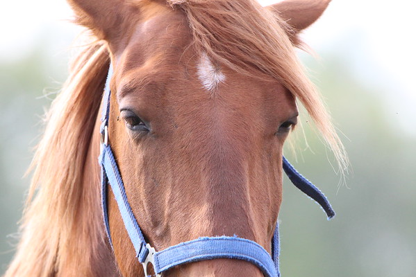 Close up of a horse from the south side of Anderson.<br /> <br /> Photographer's Name: Brian Fox<br /> Photographer's City and State: Anderson, Ind.