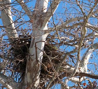 Eagle nest near Pendleton.  Photographer's Name: Debra Howell Photographer's City and State: Pendleton, Ind.