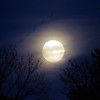 Last night's full moon.<br /> <br /> Photographer's Name: Amanda Gloff<br /> Photographer's City and State: Anderson, Ind.