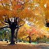 Beautiful fall foliage, Pendleton cemetery.<br /> <br /> Photographer's Name: Debra Howell<br /> Photographer's City and State: Pendleton, Ind.