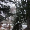 First snowfall at Shadyside Park.<br /> <br /> Photographer's Name: Harry Van Noy<br /> Photographer's City and State: Anderson, Ind.
