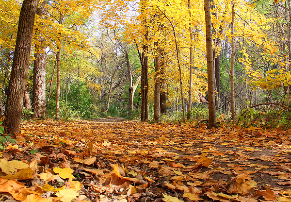 Leaf covered Trail Five at Mounds Park.<br /> <br /> Photographer's Name: Jerry Byard<br /> Photographer's City and State: Anderson, Ind.