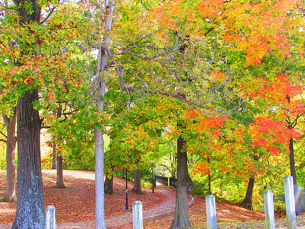 Shadyside Park, taken 10/31/2016.<br /> <br /> Photographer's Name: Micah Mitchell<br /> Photographer's City and State: Anderson, Ind.