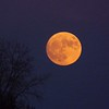 Super moon in Richland Township.<br /> <br /> Photographer's Name: J.R. Rosencrans<br /> Photographer's City and State: Alexandria, Ind.