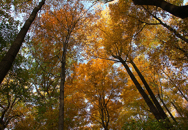 A colorful canopy in the woods at Mounds Park.<br /> <br /> Photographer's Name: Jerry Byard<br /> Photographer's City and State: Anderson, Ind.