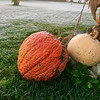 Frost on the pumpkin at my farm in Richland Township.<br /> <br /> Photographer's Name: J.R. Rosencrans<br /> Photographer's City and State: Alexandria, Ind.
