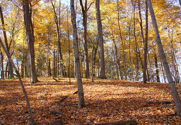 A colorful carpeted hill at Mounds Park.<br /> <br /> Photographer's Name: Jerry Byard<br /> Photographer's City and State: Anderson, Ind.