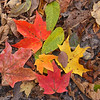 A sure sign of fall with a colored leaf pattern on a trail at Mounds Park.<br /> <br /> Photographer's Name: Jerry Byard<br /> Photographer's City and State: Anderson, Ind.