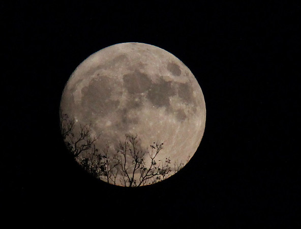 Sunday evening's look at the super moon.<br /> <br /> Photographer's Name: Jerry Byard<br /> Photographer's City and State: Anderson, Ind.