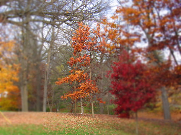 A Shadyside Park autumn tree, with shedding its leaves.<br /> <br /> Photographer's Name: Harry Van Noy<br /> Photographer's City and State: Lafayette Township, Ind.