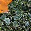 A frosty morning in my yard.<br /> <br /> Photographer's Name: Jerry Byard<br /> Photographer's City and State: Anderson, Ind.