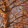 Golden tree limbs.<br /> <br /> Photographer's Name: Harry Van Noy<br /> Photographer's City and State: Lafayette Township, Ind.