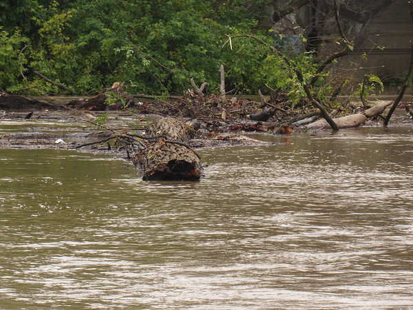Debris speeding down the flooding White River after recent thunderstorms.<br /> <br /> Photographer's Name: Harry Van Noy<br /> Photographer's City and State: Lafayette Township, Ind.
