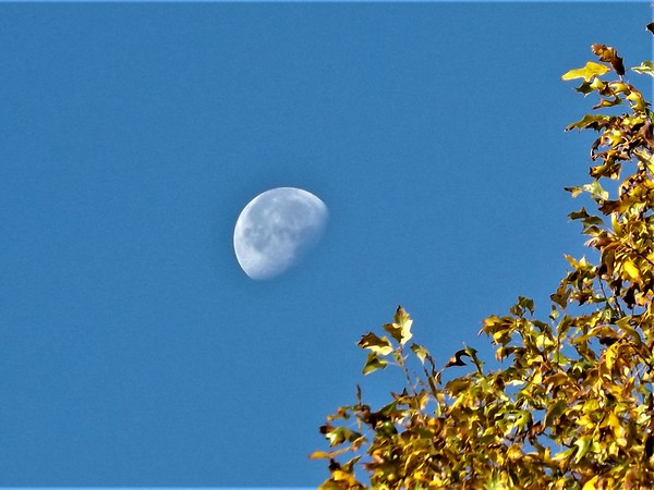 November moon and fall foliage.<br /> <br /> Photographer's Name: J.R. Rosencrans<br /> Photographer's City and State: Alexandria, Ind.