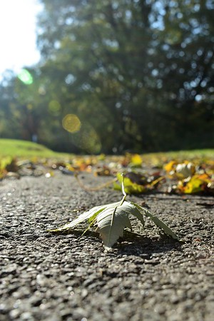 A fallen leaf, on a path to nowhere.<br /> <br /> Photographer's Name: Harry Van Noy<br /> Photographer's City and State: Lafayette Township, Ind.