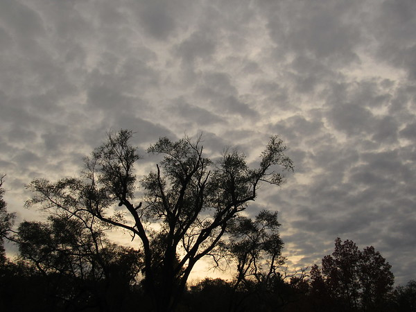 A tree, silhouetted with a recent cloud-covered sky.<br /> <br /> Photographer's Name: Harry Van Noy<br /> Photographer's City and State: Lafayette Township, Ind.