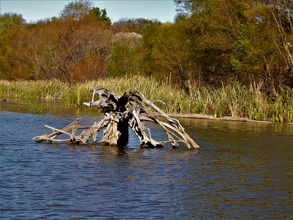 Nature's art work at Geist Reservoir.<br /> <br /> Photographer's Name: J.R. Rosencrans<br /> Photographer's City and State: Alexandria, Ind.