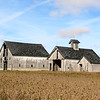 Three green-roofed barns in Northern Madison County.<br /> <br /> Photographer's Name: Brian Fox<br /> Photographer's City and State: Anderson, Ind.