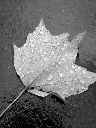 Rainy autumn days<br /> <br /> Photographer's Name: Nina Grace<br /> Photographer's City and State: Anderson, Ind.