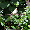 Barbara and Jerry Ward have this unusual all white Sparrow visiting them on occasion.<br /> <br /> Photographer's Name: Terry Ward<br /> Photographer's City and State: Frankton, Ind.