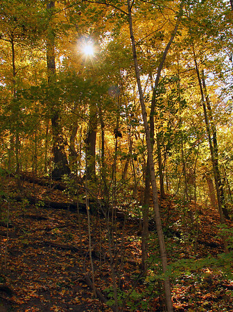 The sun bursts through a colorful hillside at Mounds Park on a recent hike.<br /> <br /> Photographer's Name: Jerry Byard<br /> Photographer's City and State: Anderson, Ind.