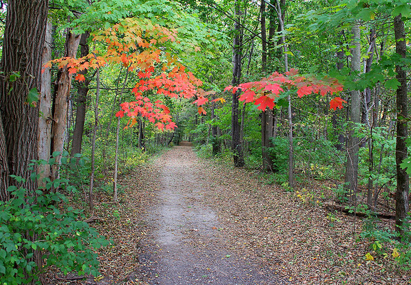 Red leaves mark Trail 5 at Mounds State Park.<br /> <br /> Photographer's Name: Jerry Byard<br /> Photographer's City and State: Anderson, Ind.