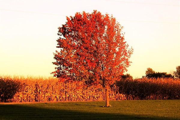Changing green to red in Richland Township.<br /> <br /> Photographer's Name: J.R. Rosencrans<br /> Photographer's City and State: Alexandria, Ind.