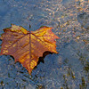 A passing leaf in White River at Mounds Park.<br /> <br /> Photographer's Name: Jerry Byard<br /> Photographer's City and State: Anderson, Ind.