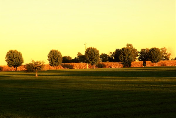 Long shadows at my farm in Richland Township.<br /> <br /> Photographer's Name: J.R. Rosencrans<br /> Photographer's City and State: Alexandria, Ind.