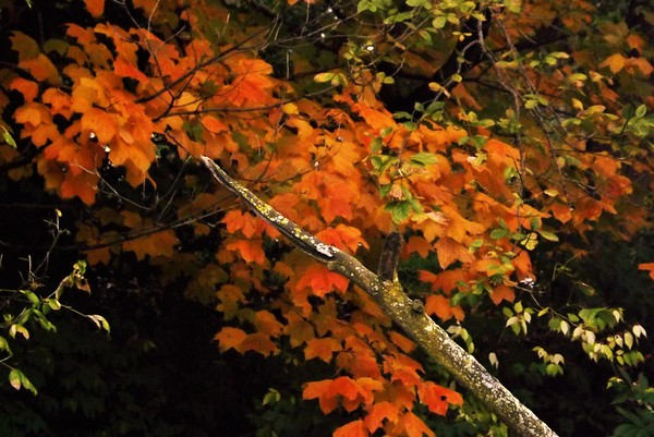 Orange October's color. <br /> <br /> Photographer's Name: J.R. Rosencrans<br /> Photographer's City and State: Alexandria, Ind.