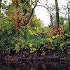 Madison County autumn: Killbuck Creek at Cross Street.<br /> <br /> Photographer's Name: J.R. Rosencrans<br /> Photographer's City and State: Alexandria, Ind.