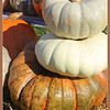 A pile of pumpkins.<br /> <br /> Photographer's Name: Laura Johnson<br /> Photographer's City and State: Alexandria, Ind.