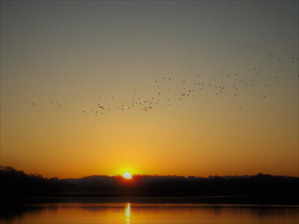 Morning movement...hundreds of ducks flying at dawn at Geist Reservoir.<br /> <br /> Photographer's Name: J.R. Rosencrans<br /> Photographer's City and State: Alexandria, Ind.