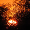 The setting sun in mid-October.<br /> <br /> Photographer's Name: Harry Van Noy<br /> Photographer's City and State: Lafayette Township, Ind.