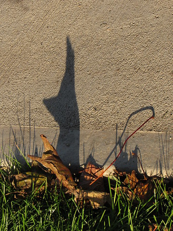 Dog ears up, from the shadow of a leaf.<br /> <br /> Photographer's Name: Harry Van Noy<br /> Photographer's City and State: Lafayette Township, Ind.