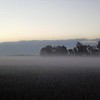 Soybean fog shot.<br /> <br /> Photographer's Name: J.R. Rosencrans<br /> Photographer's City and State: Alexandria, Ind.