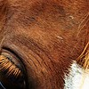 In a blink of a eye: A rescue horse at Moon Rise Farms.<br /> <br /> Photographer's Name: J.R. Rosencrans<br /> Photographer's City and State: Alexandria, Ind.