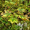 """Autumn's Leaves:"" My woods in Richland Township.<br /> <br /> Photographer's Name: J.R. Rosencrans<br /> Photographer's City and State: Alexandria, Ind."