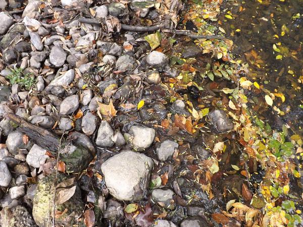 Rocks at Killbuck Creek.<br /> <br /> Photographer's Name: J.R. Rosencrans<br /> Photographer's City and State: Alexandria, Ind.