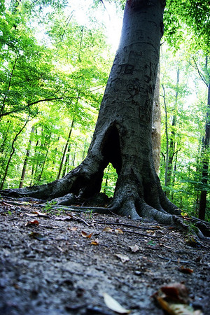 A tree at Mounds State Park.  Photographer's Name: Morgan Elbert Photographer's City and State: Alexandria, Ind.
