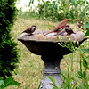 Mom's birdbath in Elwood.<br /> <br /> Photographer's Name: Michelle Estelle<br /> Photographer's City and State: Marion, Ind.