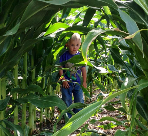Jett Johnson says this corn is not ready for harvest.<br /> <br /> Photographer's Name: Jacole Johnson<br /> Photographer's City and State: Frankton, Ind.