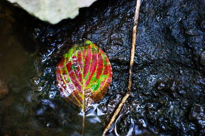 A leaf along the river at Salimonie Reservoir.  Photographer's Name: Morgan Elbert Photographer's City and State: Alexandria, Ind.