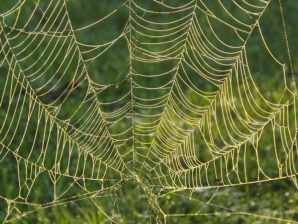 Morning webs at the farm in Richland Township.<br /> <br /> Photographer's Name: J.R. Rosencrans<br /> Photographer's City and State: Alexandria, Ind.